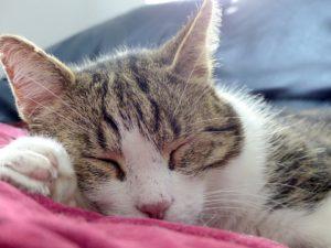 chat endormi